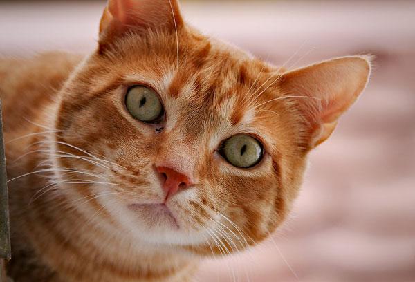 17885-cat-close-up-pv